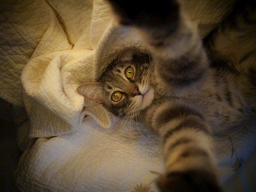 Кошачьи самострелы (21 фото)