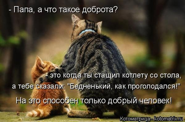 Новый сборник котоматриц (29 шт)