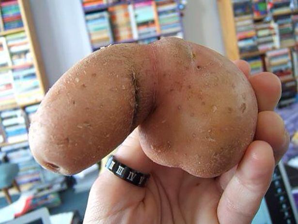 фото великих пенісов