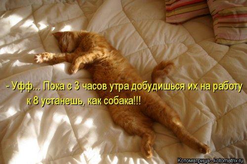 Новый сборник котоматриц (26 шт)