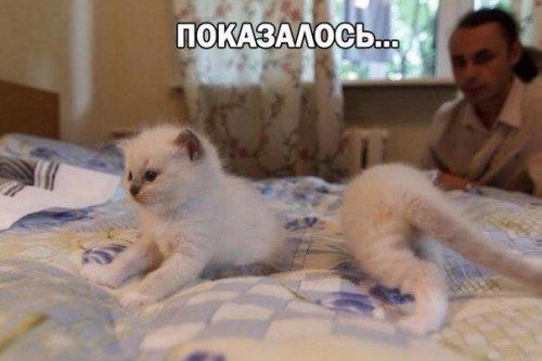 Свежие приколычи от Бугага.ру (49 шт)