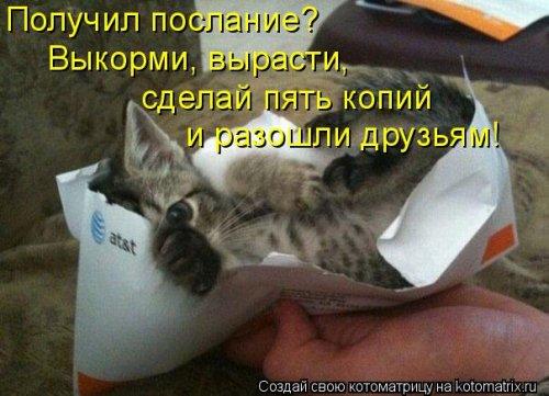 Прикольные котоматрицы (26 шт)