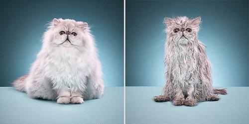 Мокрые коты (15 фото)