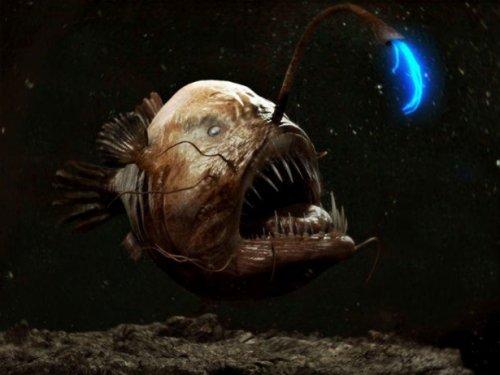 6 Существ, из-за которых не стоит плавать в океане