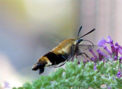10 Самых необычных существ в природе