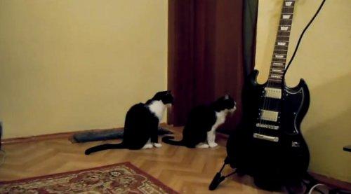 Кошка пытается извиниться
