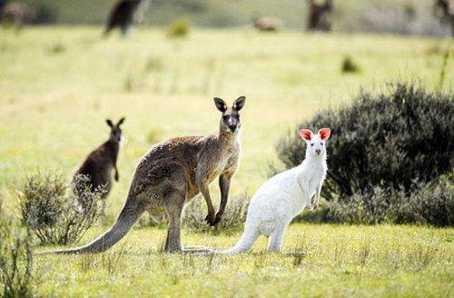 Топ-10: Удивительные цветовые мутации у животных