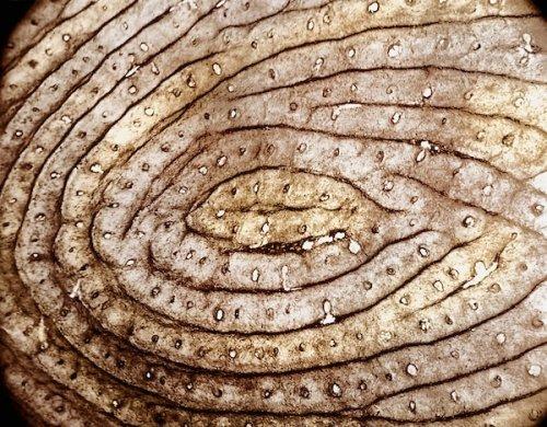 Человеческий организм под микроскопом (17 фото)