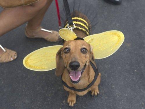 Собачий праздник перед карнавалом в Рио-де-Жанейро (20 фото)