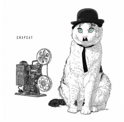 Культовые коты (13 фото)