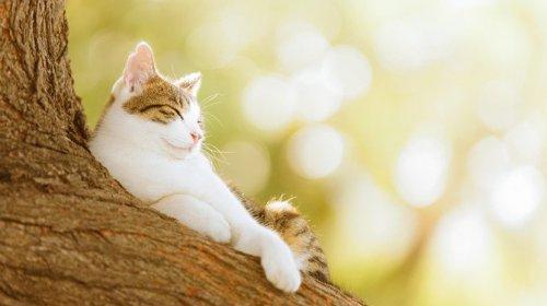 Кошки в фотографиях Seiji Mamiya (34 фото)