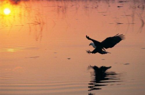 Топ-10: Необычные птицы из мировой мифологии