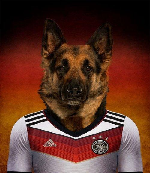 Собаки в форме сборных своих стран (16 фото)