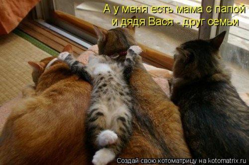 Свежий сборник котоматриц (34 шт)
