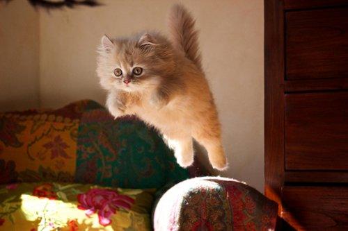 Коты и кошки (32 фото)