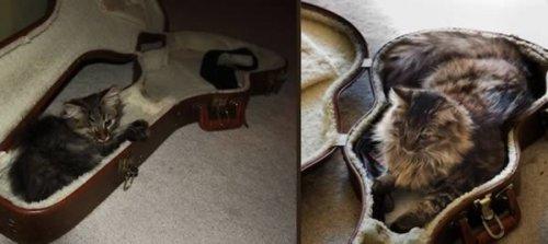 Домашние питомцы тогда и сейчас (12 фото)