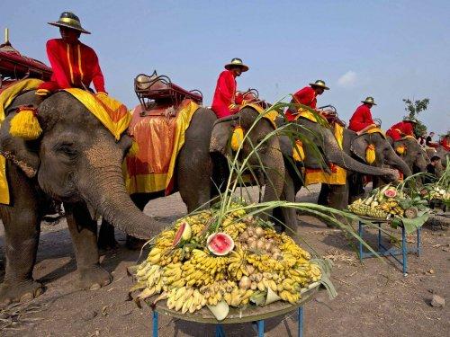 Национальный праздник Таиланда – День слона (9 фото)