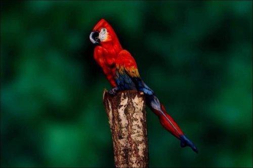 Необычный попугай (4 фото)