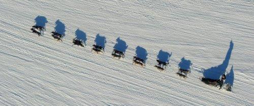 На Аляске состоялись гонки на собачьих упряжках (33 фото)