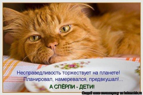 Свежие котоматрицы (31 шт)
