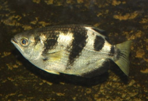 Топ-10: Водные животные с удивительными сверхспособностями