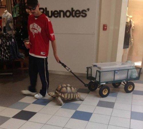 Чудаки и чудачества в торговых центрах (13 фото)