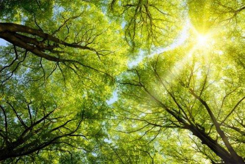 Топ-10 Удивительных легенд о мифологических деревьях
