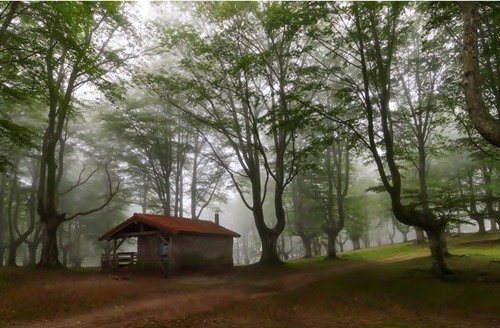 Уединённые лесные домики (24 фото)