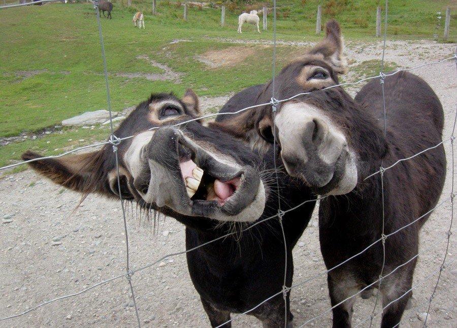 фото приколы животных смешные до слез очень ожога