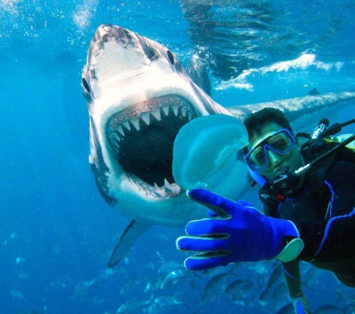 Необычные картинки акул можете найти