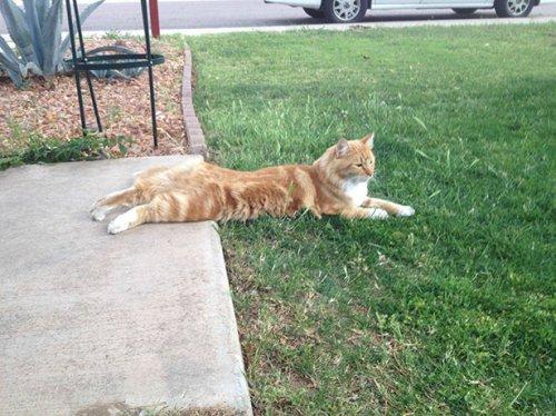 Коты и кошки (28 фото)