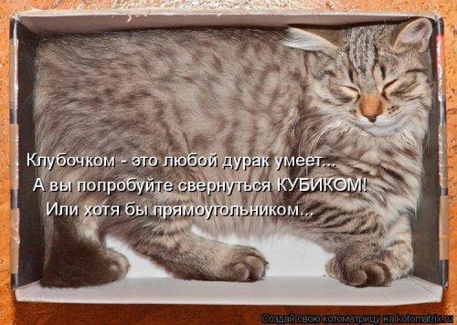 Новая котоматрица (34 шт)
