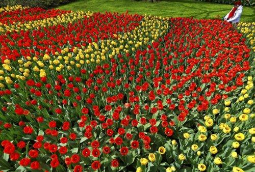 Парк Кёкенхоф – Сад Европы (11 фото)