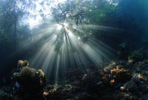 Победители конкурса подводной фотографии 2014 года (26 фото)