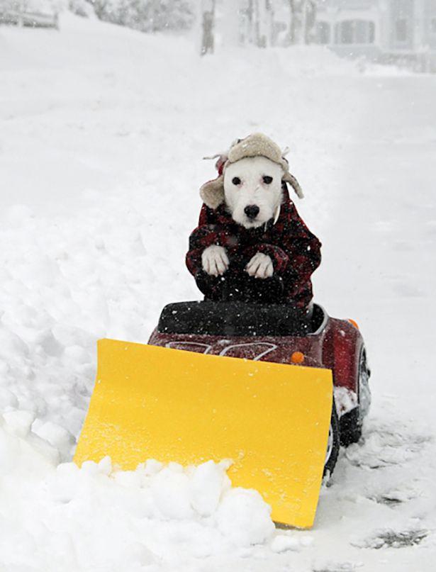 Смешные картинки про снегопад