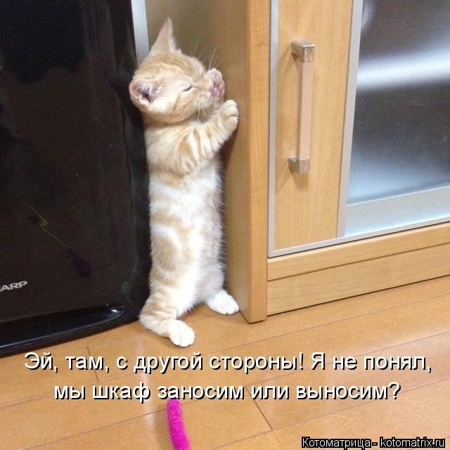 http://www.bugaga.ru/uploads/posts/2014-05/1400864018_kotomatricy-2.jpg
