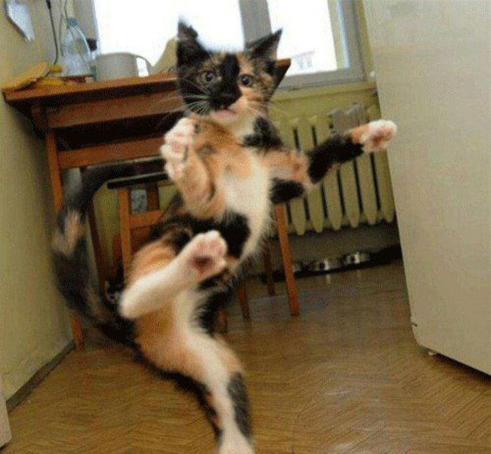 Картинки по запросу смешные коты