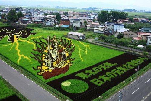 Впечатляющие рисунки на рисовых полях (27 фото)