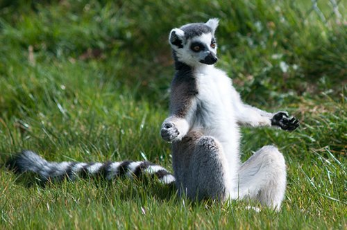 Животные тоже любят заниматься йогой (24 фото)