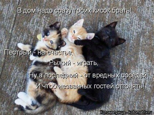 Новая котоматрица (31 фото)