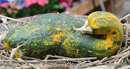 Овощи, которым надоело быть овощами (25 фото)