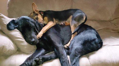 Собаки-жизнь человека украшаки (35 фото)