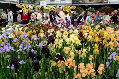 Цветочная выставка Chelsea Flower Show 2014 (24 фото)
