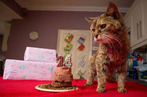 Поппи, самая пожилая кошка в мире (14 фото)