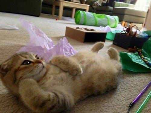 Смешные коты и кошки (19 фото)