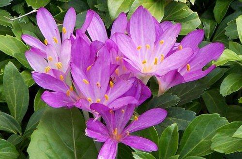 Топ-10 Красивых цветов, которые убивают ужасающими способами