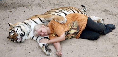 Домашние тигры жительницы Флориды (11 фото + видео)
