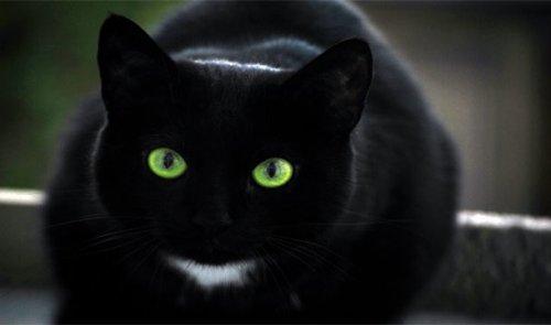 25 Распространенных суеверий и их происхождение