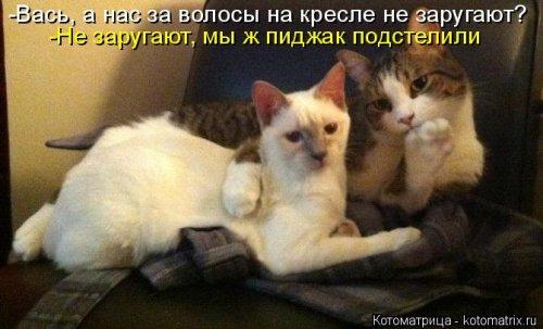 Новая котоматрица (33 шт)