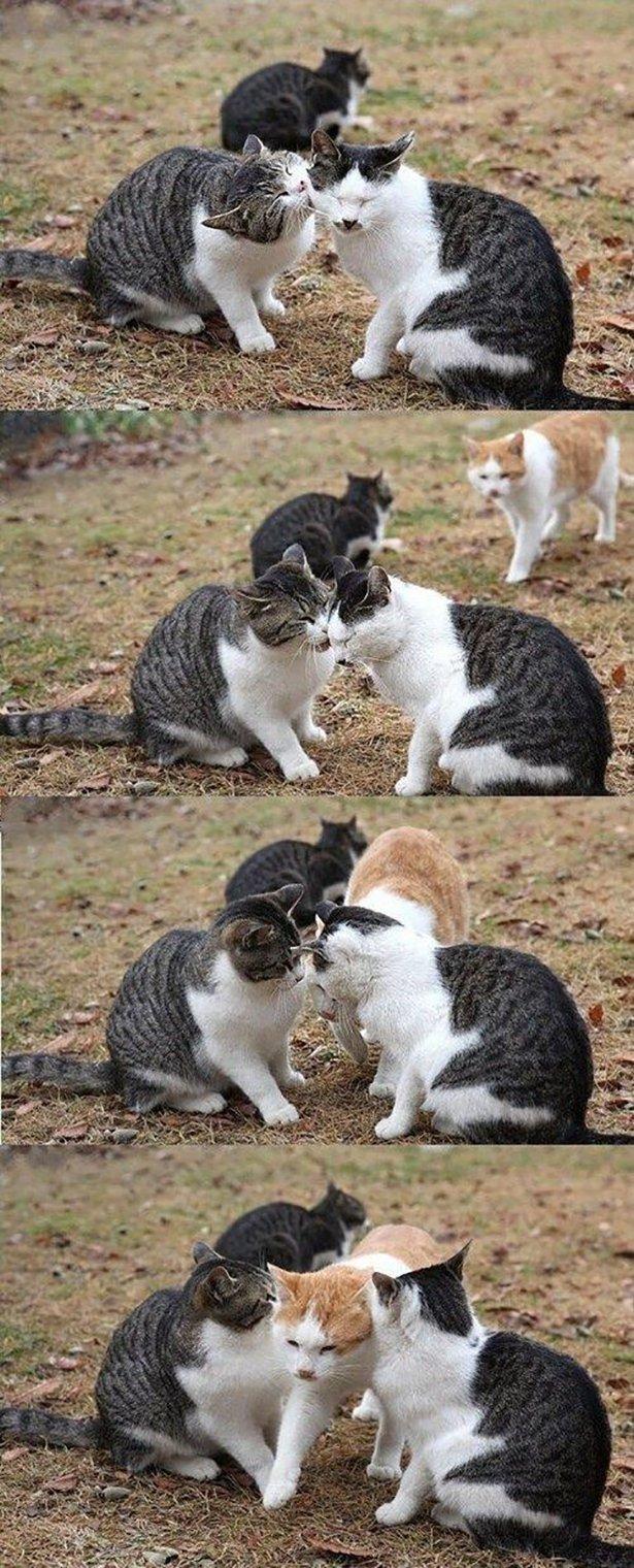 форма отличается картинки ревнивая кошка растет лесах